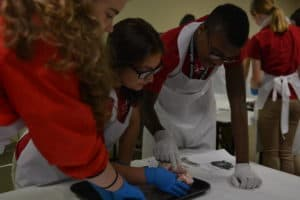 CHAMPS participants work in small groups to dissect a heart.